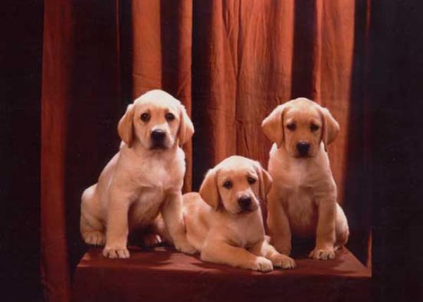 03-Cuccioli di Asia