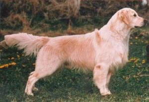 Fda 7 displasia delle anche e dei gomiti di dott ugo for Displasia anca cane sintomi